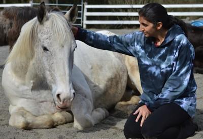 jini-horse